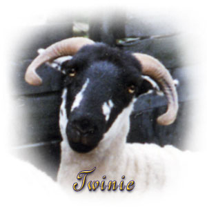 Twinie